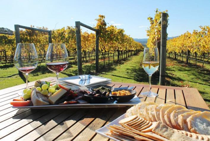 Từ cây nho đến nước Ý và rượu vang: Mối tương quan được tạo hóa sắp đặt?