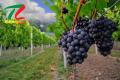 Vin de bordeaux Ulysse Bordeaux - sự hoàn hảo đến từ nước Pháp