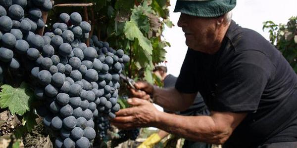 Những lý do khiến rượu vang Ý nhập khẩu được người tiêu dùng Việt yêu thích