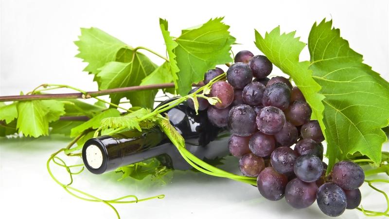 Rượu vang Chile, tìm hiểu về vang Chile