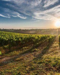 Tiểu vùng sản xuất vang Salento - Quê hương của những chai vang Ý nổi tiếng nhất