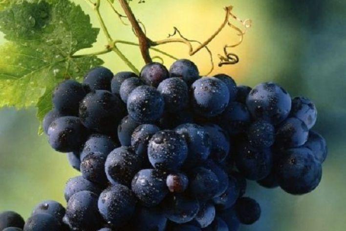 Rượu vang đỏ - thức uống tạo nên đẳng cấp